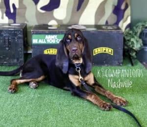 K-9 Companions Nashville